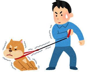 イヌが散歩で歩かない理由!!
