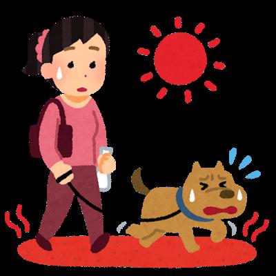 夏の散歩は危険が一杯!!